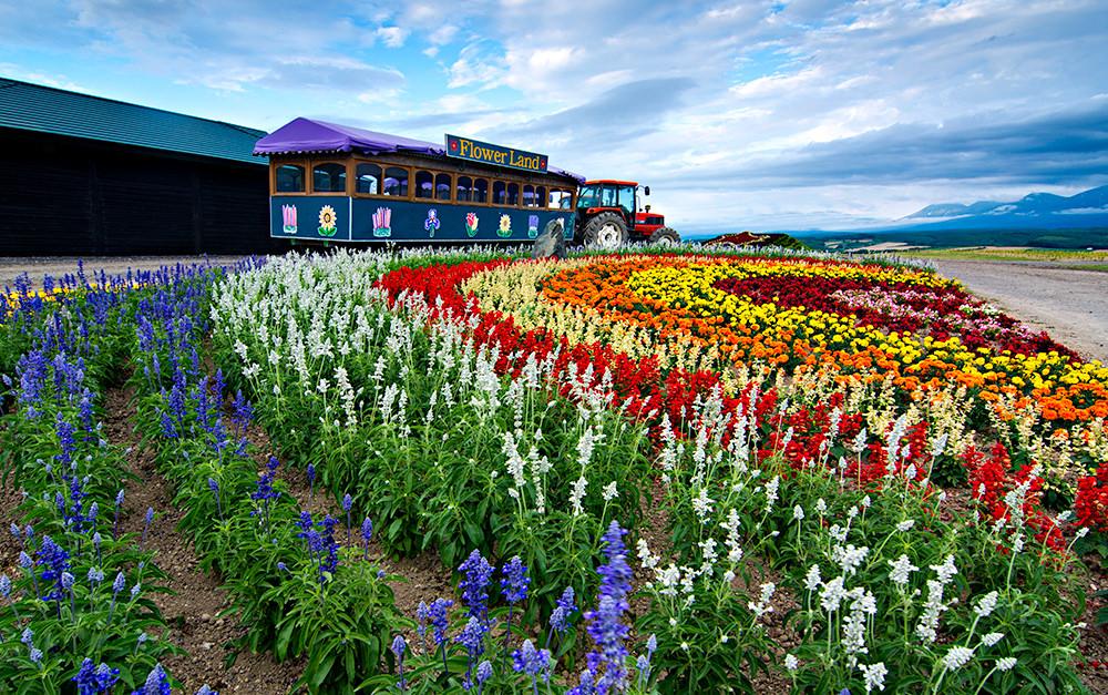 Hasil gambar untuk flower land kamifurano